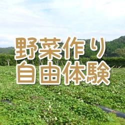 野菜作り体験